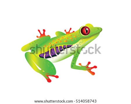 Vector illustration of frog for your design