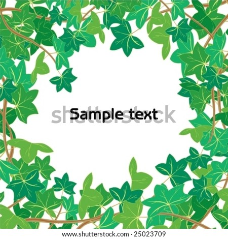 Vector illustration of Green ivy isolated on white background with space for your text or picture - stock vector