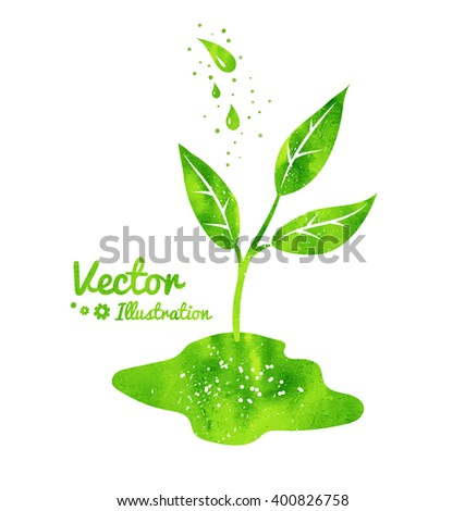 Vector illustration of growing sprout and water drops with green watercolor texture. - stock vector