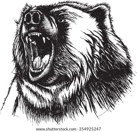 Angry bear head drawing - photo#8
