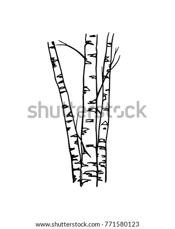 vector illustration hand drawn birch tree stock vector 771580123 rh shutterstock com birch tree leaves vector birch tree vector free download