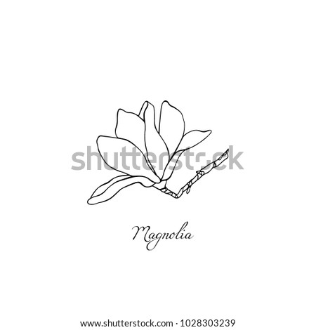 Vector illustration hand drawn magnolia flower stock vector vector illustration of hand drawn magnolia flower beautiful floral design elements ink drawing maxwellsz