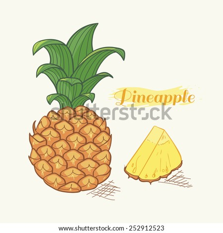 Vector illustration of hand drawn pineapple