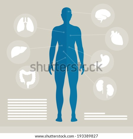 Vector Illustration of Human Organs