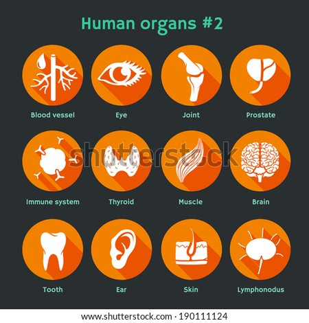 Vector illustration of icons of internal human organs and systems. Flat design - stock vector