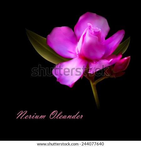 vector illustration of isolated nerium oleander pink flower. - stock vector