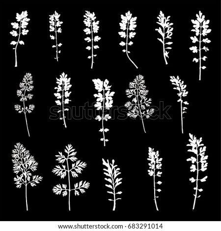 Vector illustration of isolated parsley leaves. 16 different white parsley leaves on black background.
