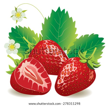 vector illustration of juicy strawberries isolated - stock vector