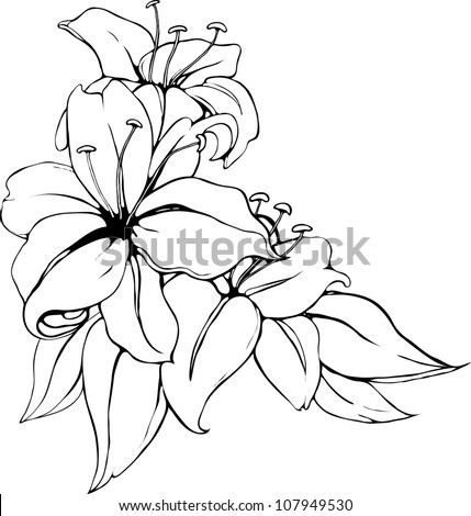 Vector illustration of lily in black and white colors. - stock vector