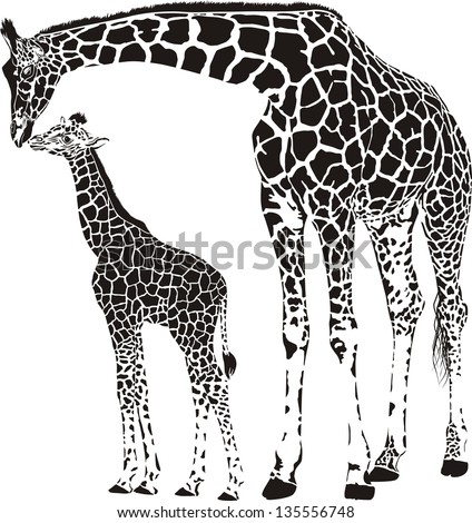 vector illustration of mother and young giraffe - stock vector
