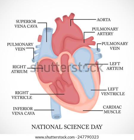 Vector illustration of National Science Day.