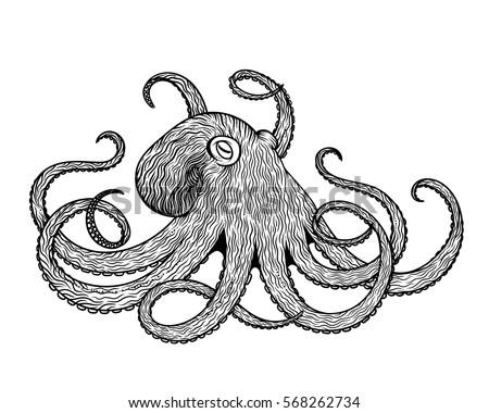 Realistic octopus vector stock images royalty free images for Realistic octopus coloring page