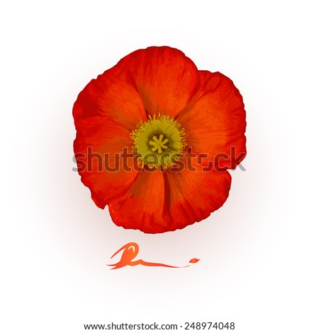 Vector illustration of one isolated red poppy flower - stock vector