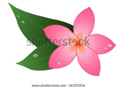 Vector illustration of one red plumeria on leaves - stock vector