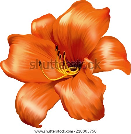 Vector illustration of Orange Red lily flower isolated on a white background - stock vector