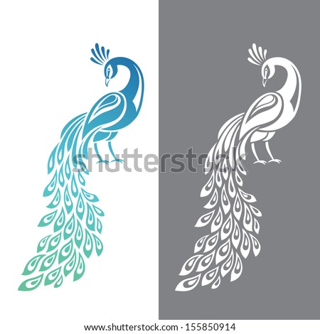 Vector illustration of peacock in color and monochrome variations - stock vector
