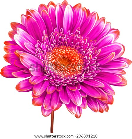 Vector illustration of pink red Dahlia flower. Spring flower.Isolated on white background. - stock vector