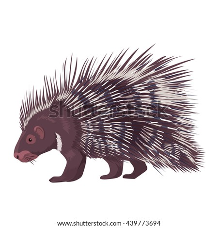 Vector illustration of porcupine isolated on a white background - stock vector