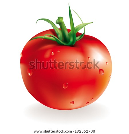 vector illustration of red fresh tomato isolated on white background  - stock vector