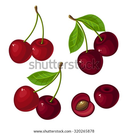Vector illustration of ripe cherry with stem, green leaves on a white background.