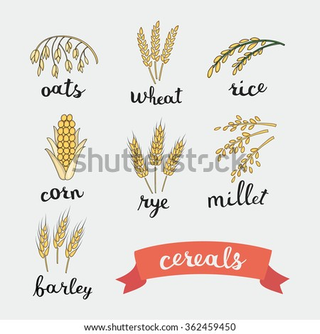 Vector illustration of ripe ears of cereals with inking and lettering names in English  - stock vector