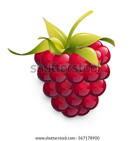Vector illustration of ripe raspberry isolated on white background. Fresh berry illustration. Cartoon style icon. Healthy food illustration.