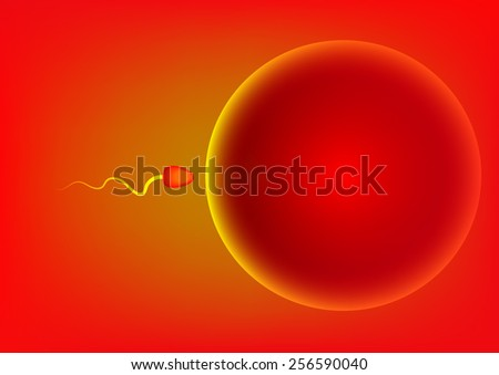 Vector illustration of sperm and egg breed - stock vector