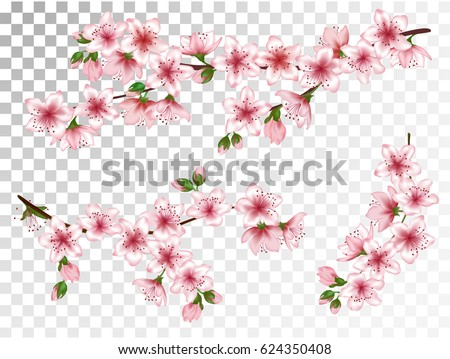 Vector illustration of spring bloom branch with pink flowers, buds. Realistic design isolated on white. Blooming cherry tree twigs set, blossom collection. Apple, peach or apricot flowering branches.