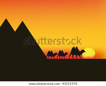 vector illustration of sunset in Egypt with camels and red sky