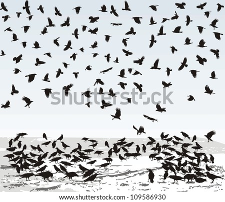 Vector illustration of the crows on the snowy field