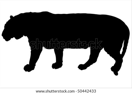 Vector illustration of tiger contour under the white background