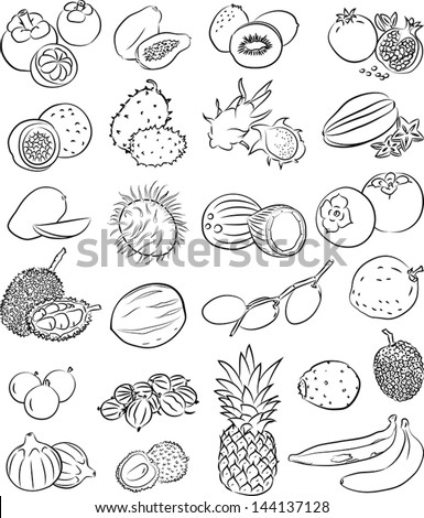 Vector illustration of tropical fruits - stock vector