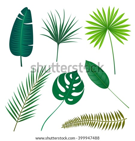 Vector Illustration of Tropical Leaves - stock vector