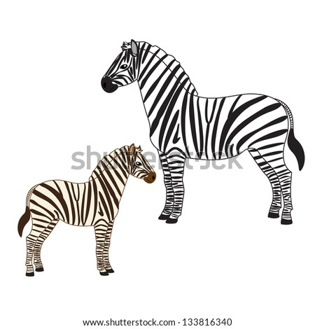 Vector illustration of two zebras - adult and baby - stock vector