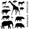 Vector illustration of various african animals - stock vector