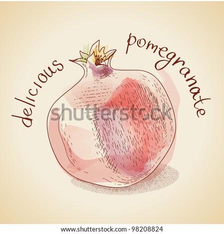 Vector illustration of vintage pomegranate - stock vector