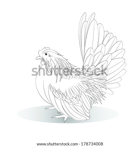 Vector illustration of white Bantam on a white background,female - stock vector