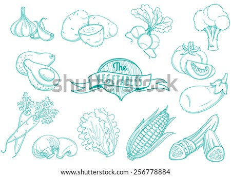 Vector illustration Outline hand drawn vegetable set (flat style, thin  line)  - stock vector