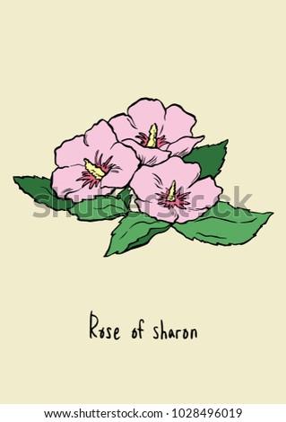 Vector Illustration Pink Rose Sharon Line Stock-Vektorgrafik ...