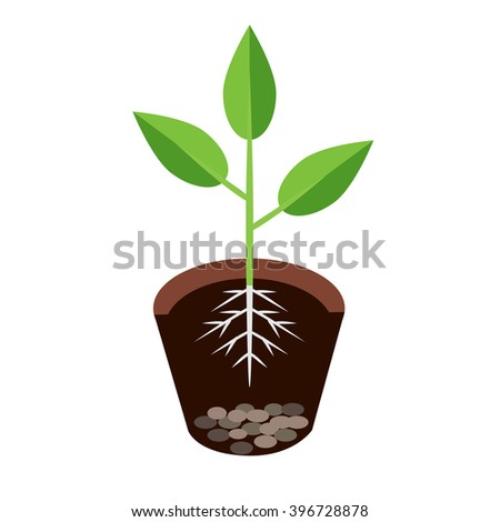 Vector illustration plant growing in the ground - vector illustration - stock vector