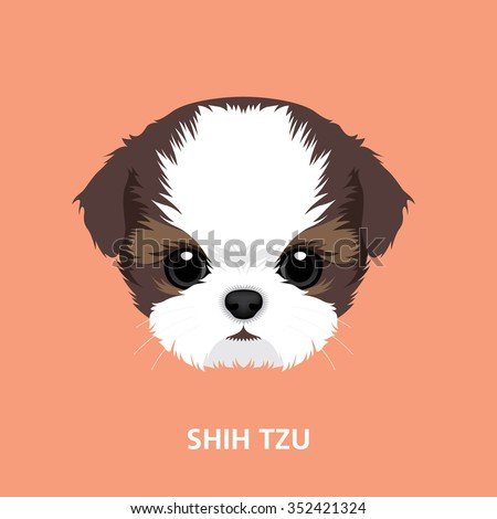 Shih Tzu Stock Images Royalty Free Images amp Vectors