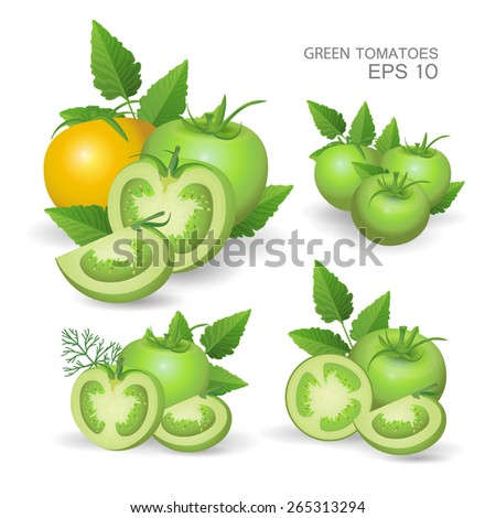 Vector illustration. Set of green fresh realistic tomatoes composition with leaves and dill isolated on white background - stock vector