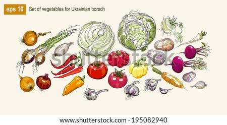 Vector illustration set of vegetables for Ukrainian borsch - stock vector