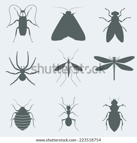 Vector illustration silhouettes of insects - stock vector