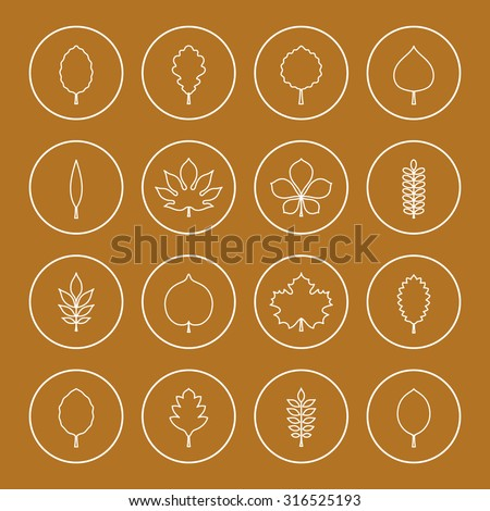 Vector illustration: sixteen white contours of different tree leaves (elm, beech, ash, linden, birch, alder, poplar, rowan, hawthorn, acacia, chestnut, conker etc.) in circles on golden background