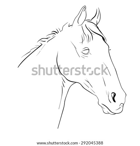 Vector illustration sketch of a horse's head