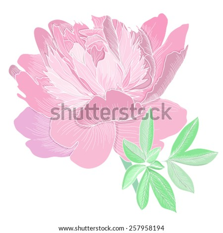 Vector illustration with beautiful peony