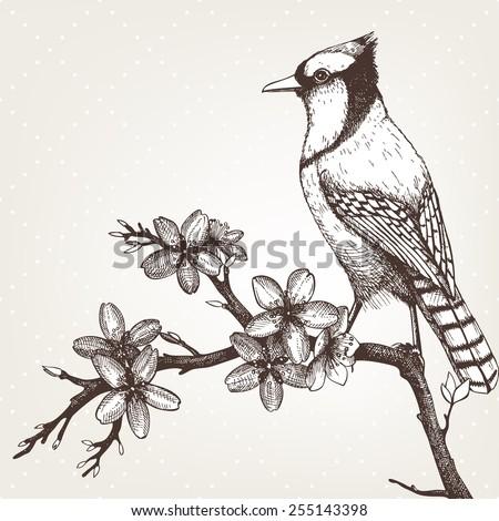 Bird Sketch Stock Images Royalty-Free Images U0026 Vectors | Shutterstock