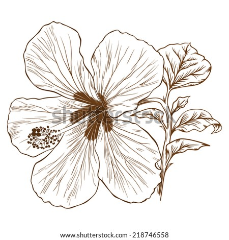 Vector illustration with hibiscus in vintage engraving style.