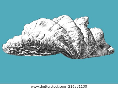 Vector illustration  with one large shell on a blue background - stock vector